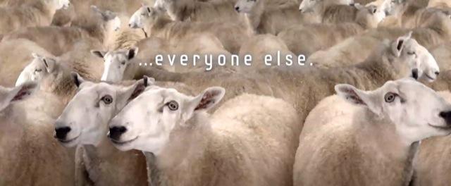 pecore-samsung