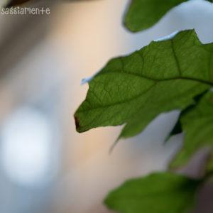 sony-tour-milano-nascosta-foto5